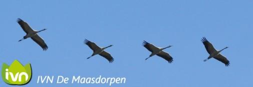 Gratis lezing vogeltrek door IVN Maasdorpen 27-9 Zoemhukske